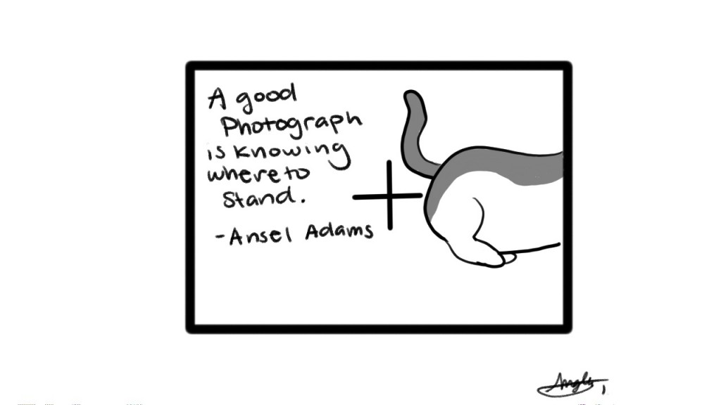 A good photograph is knowing where to stand. - Ansel Adams